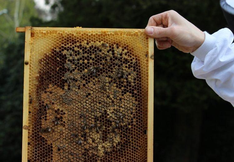bijen sterfte(bijen redden) is helaas verhoogd maar jij kan samen met ons helpen dit probleem op te lossen. studio ECO kiest voor het ondersteunen van de bijen omdat ...