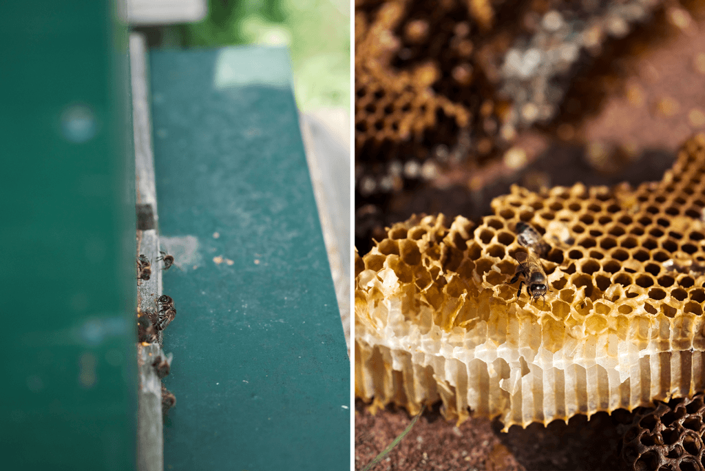 bijen sterfte is helaas verhoogd maar jij kan samen met ons helpen dit probleem op te lossen. studio ECO kiest voor het ondersteunen van de bijen omdat ...